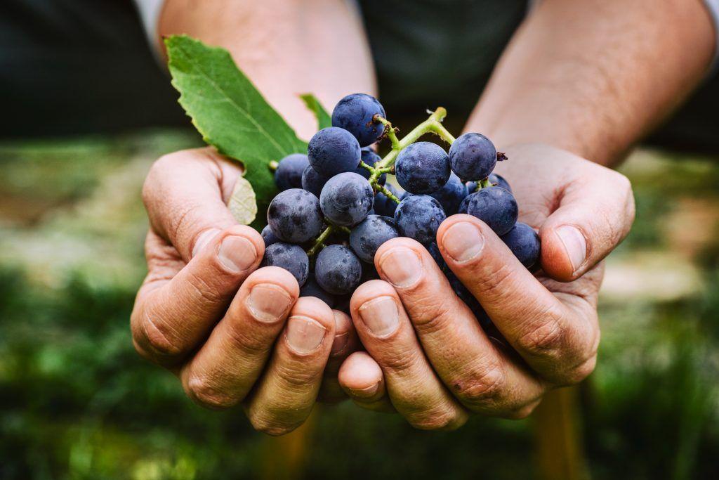 Beneficios de una copa de vino tinto al día